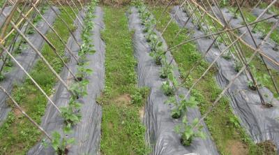Bạt che mặt luống nông nghiệp