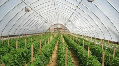 Vòm che nhà kính trồng rau